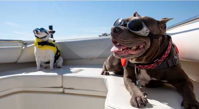 Boating with Dogs